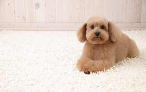 Carpet Cleaning 97