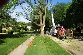 tree service 2